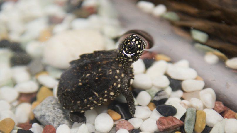 Nace un galápago en el BioDomo del Parque de las Ciencias de Granada