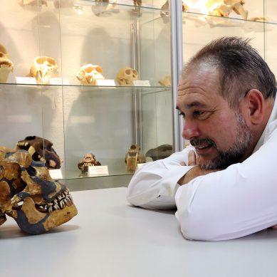 La UMA cuenta con más de 60 réplicas de cráneos de homínidos