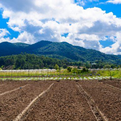 El proyecto Diverfarming ensaya la diversificación de cultivos en Italia