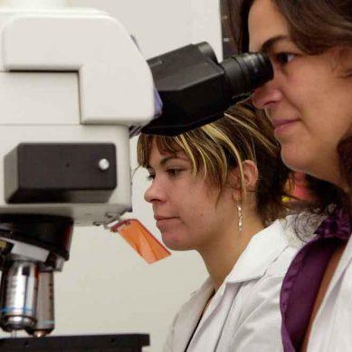 Más de 300 solicitudes de entidades públicas y privadas de investigación para el Programa Talentia Senior