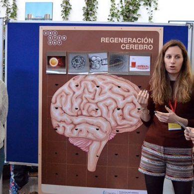 Más de 500 investigadores acercan las células madre al alumnado de Secundaria