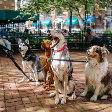 Más del 60% de las enfermedades infecciosas son causadas por animales