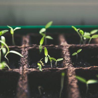¿Cómo ayudar a las plantas en la obtención de hierro?