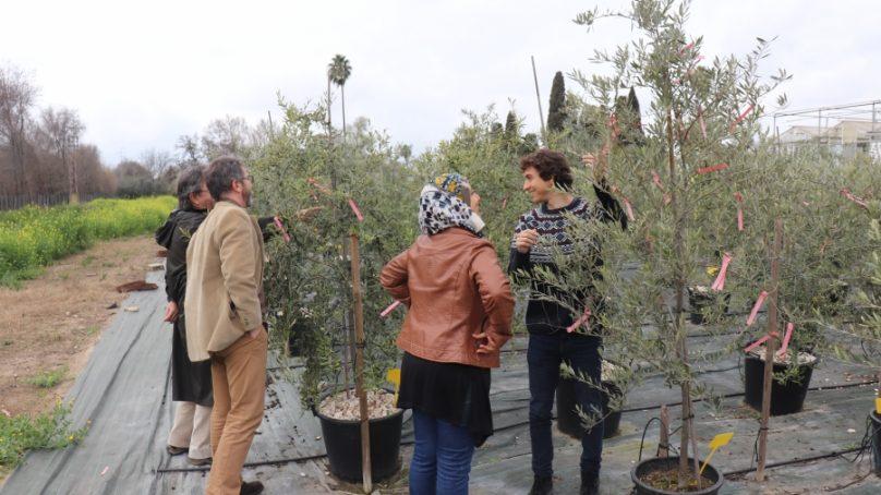 'Olive-Miracle' predice el futuro del olivo