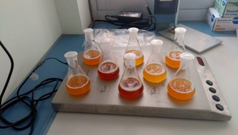 El olor de la cerveza como método para diferenciarlas