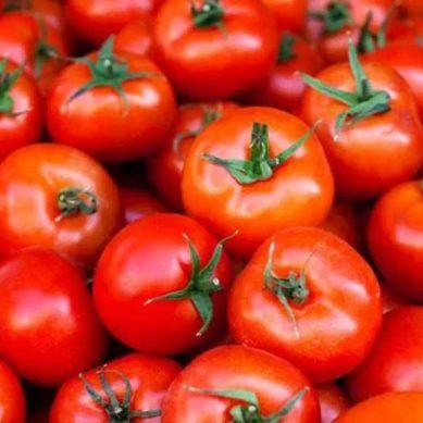 Investigadores UAL descifran nuevas claves genéticas sobre el tamaño del tomate