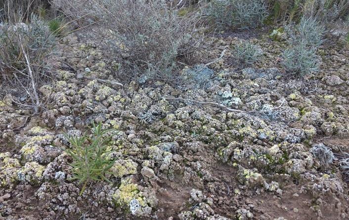 Las biocostras, clave para mitigar los efectos del cambio climático en los suelos