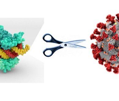 La UPO participa en la destrucción del material genético del Covid-19