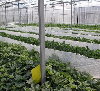 Alternativas para la reutilización de residuos agrícolas, a debate en los Cursos de Verano UAL