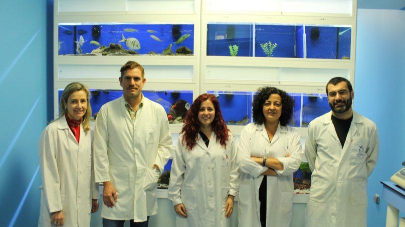 Expertos de la UGR analizan los microorganismos de los animales marinos