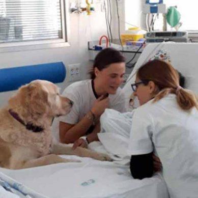 Los perros reducen el dolor en los pacientes con cáncer