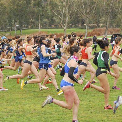 El Consejo Superior de Deportes premia a la UJA por su labor de promoción de la actividad deportiva
