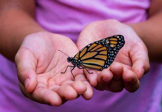 El revoleteo de las mariposas se siente en las aulas cordobesas
