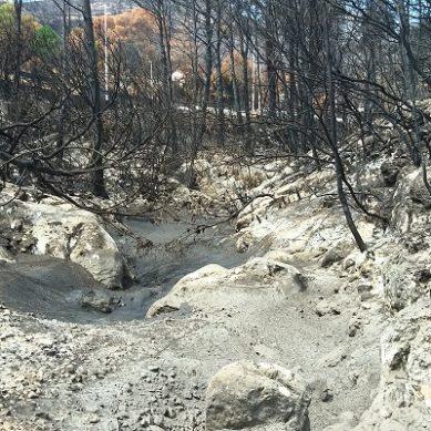 La UAL estudia la afección real de los incendios forestales en los suelos