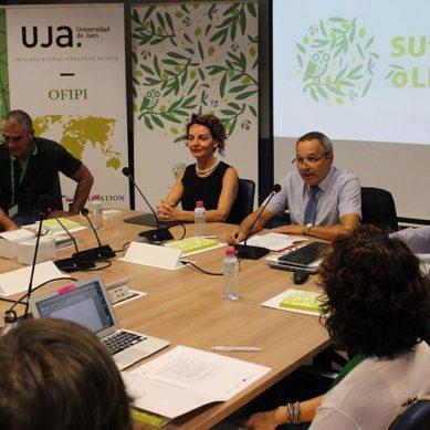 La UJA impulsa la sostenibilidad del cultivo del olivar a través del proyecto europeo SUSTAINOLIVE