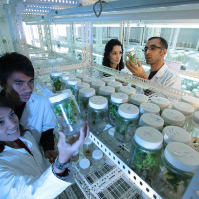 Becas para realizar estancias en institutos del CSIC