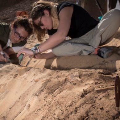 La UJA abre al público un archivo virtual con imágenes en 3D de piezas descubiertas en sus excavaciones en Asuán