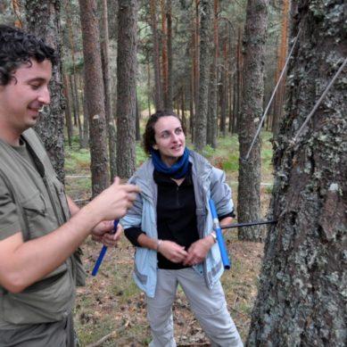 El origen genético y geográfico define la adaptación del pino carrasco a los fenómenos climáticos extremos
