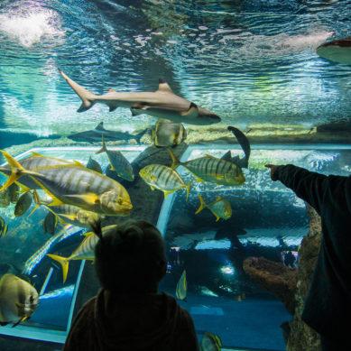 El CEIMAR y Parque de las Ciencias de Granada se unen para divulgación marina