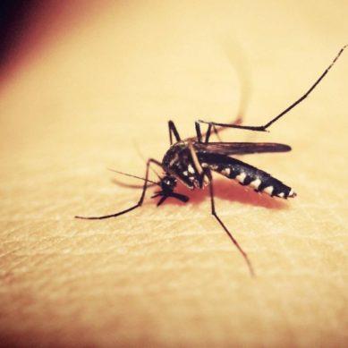 La URJC participa en un estudio que aborda el conocimiento sobre la malaria asintomática