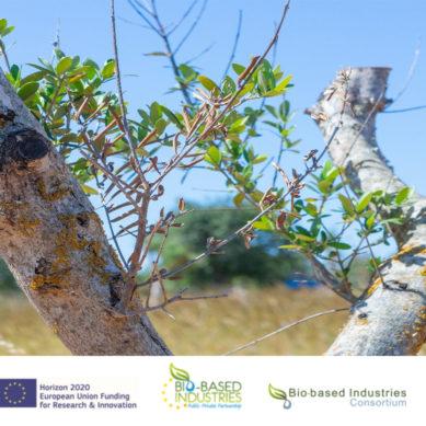 Bioplaguicidas para ayudar a salvar el patrimonio olivarero