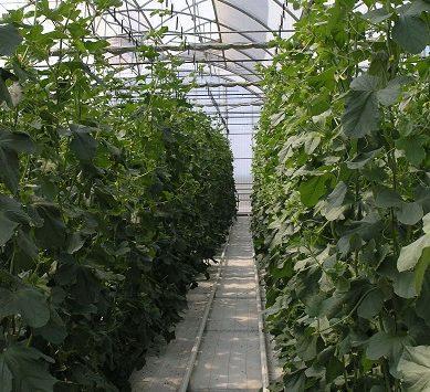 Investigadores UAL estudian la economía circular en el sector agroalimentario
