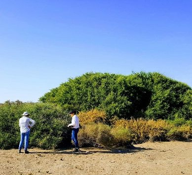 La UAL investiga sobre el cambio climático y la biodiversidad de los ecosistemas áridos