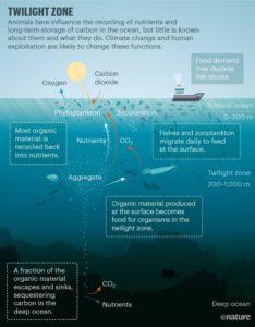 Las consecuencias de explotar las profundidades oceánicas