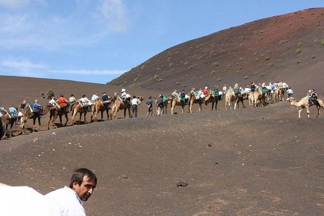 Los camellos como transporte alternativo sostenible para evitar la extinción de razas autóctonas