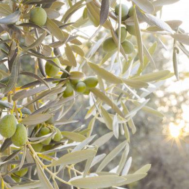 Una cata de aceite de oliva de forma virtual ¿es posible?