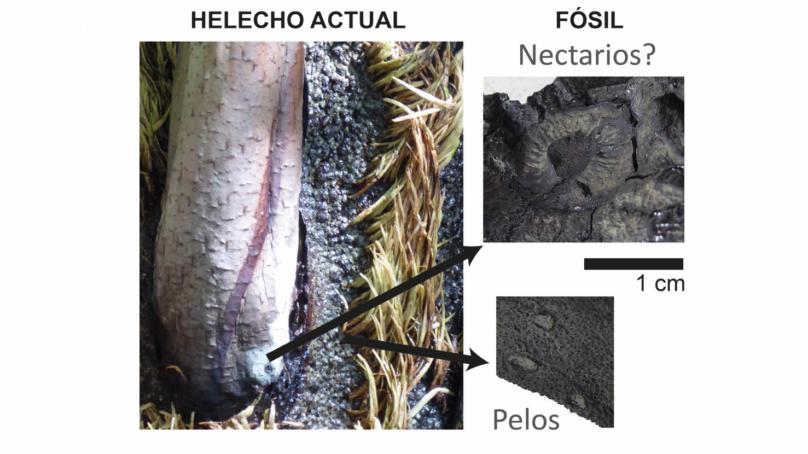El TAC de un fósil vegetal revela nuevos detalles sobre los paisajes del Mesozoico