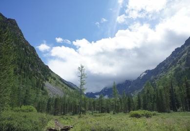 En condiciones climáticas adversas se puede perder la capacidad de los árboles de eliminar el CO2, según un estudio