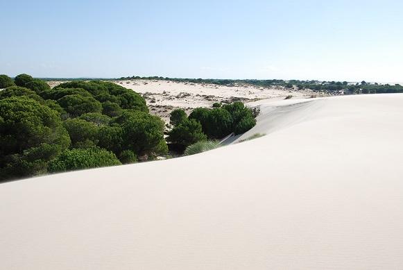 Investigadores UHU participan en la elaboración de una Guía Geológica de Doñana