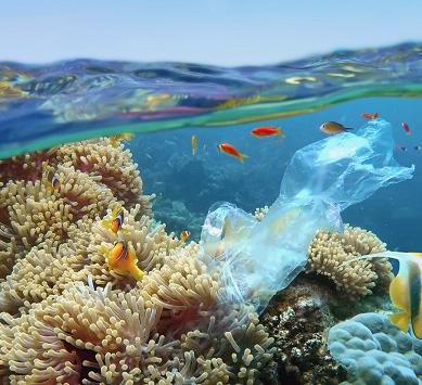 Plásticos y fauna marina, una problemática analizada por la UAL