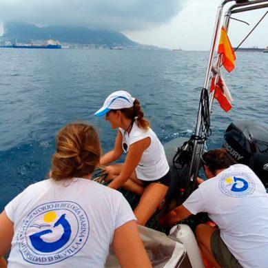 Investigadores de la US identifican y evalúan a delfines heridos en la bahía de Algeciras