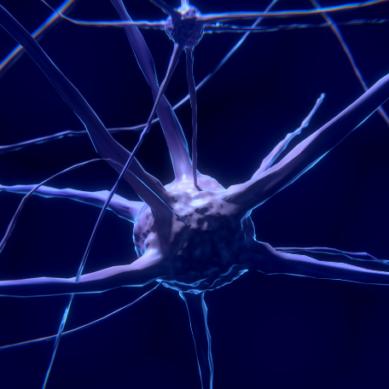 Daños cerebrales y capacidad intelectual ¿tienen relación?