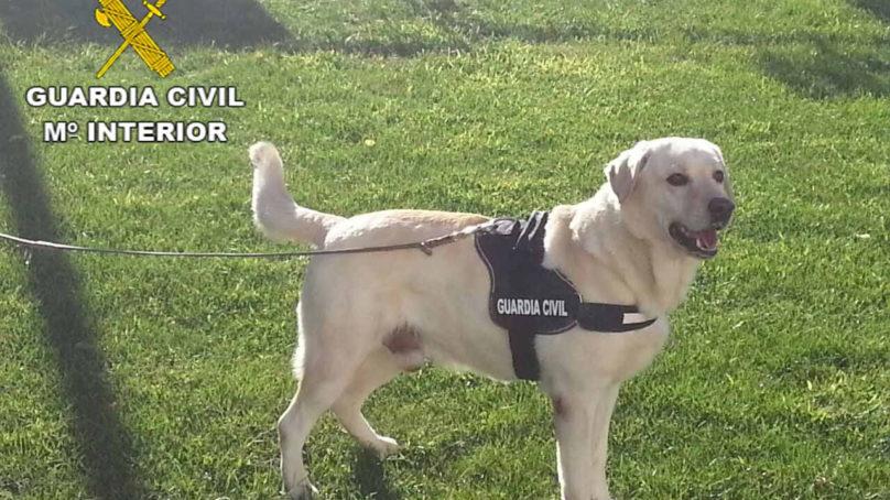 La UGR presenta un proyecto que analiza el olfato de los perros policía y su valor para obtener pruebas en la escena de un crimen