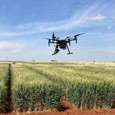 Tecnologías agrícolas inteligentes para reducir la contaminación por micotoxinas en alimentos