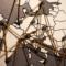 La Tarjeta Europea del Estudiante, elemento clave para unificar los campus europeos