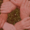 La CRUE apuesta por las buenas prácticas en una guía inclusiva para alumnos con necesidades específicas