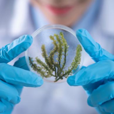 El Colegio de Biólogos de Andalucía convoca los IV Premios al Mejor Trabajo Fin de Grado en Biología