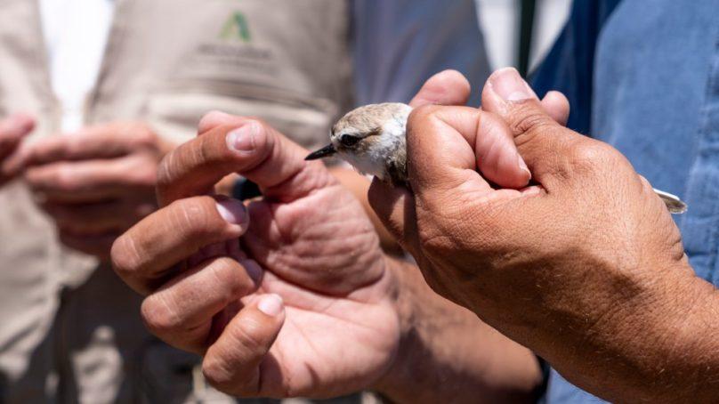 La UCA celebra una jornada para conocer el trabajo científico en conservación ambiental de La Salina La Esperanza