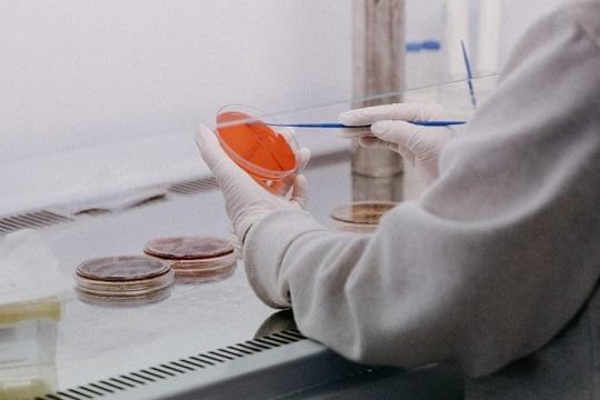 Cuatro ayudas del Departamento de Agronomía UCO para atraer talento