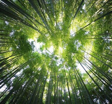 El comportamiento de los ecosistemas terrestres, analizado en la UCO